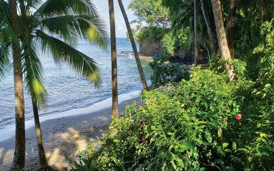 Paradise Living in Panama