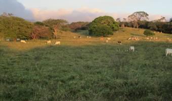 Cañas, Guanacaste, Canas, Guanacaste, Costa Rica, ,Residential,For Sale,Cañas, Guanacaste,859057